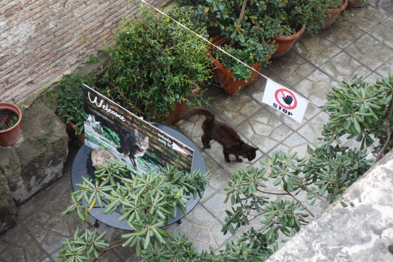 Cats of Torre Argentina